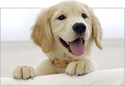 vacunacion perros mostoles