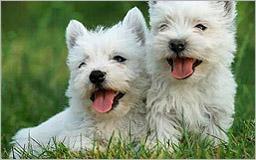 vacunacion mascotas madrid